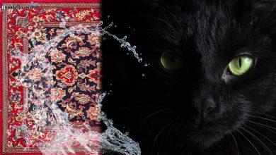 تصویر از قالیشویی | از خرافه و باور تا رسم و سنت