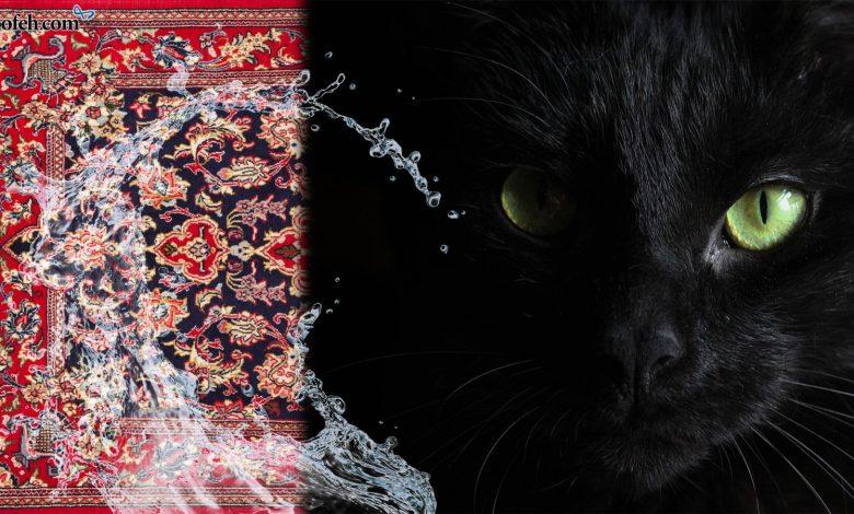قالیشویی | از خرافه و باور تا رسم و سنت