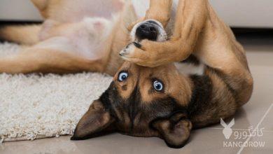 تصویر از آیا حیوانات ناقل بیماری کرونا هستند | حیوانات و کرونا