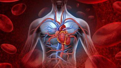 تصویر از علت افزایش یا کاهش پلاکت ها در خون چیست؟