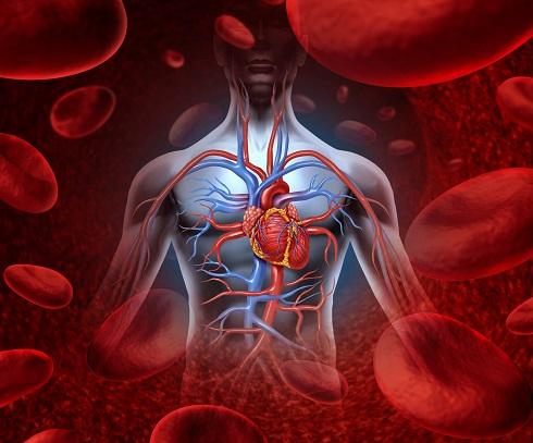 علت افزایش یا کاهش پلاکت ها در خون چیست؟