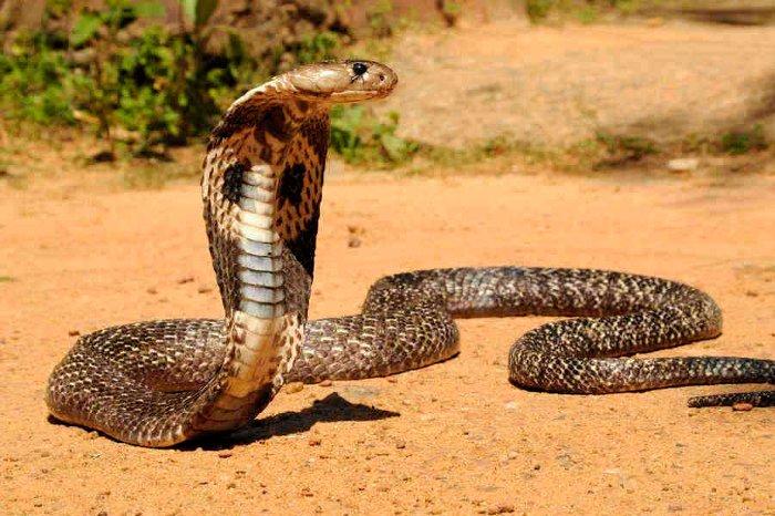 کشنده ترین حیوانات جهان - لیست 15 حیوان مرگبار و خطرناک دنیا