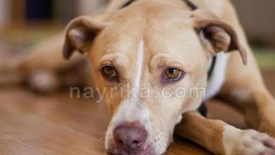 تصویر از تعبیر خواب سگ / دیدن سگ در خواب (کاملترین مرجع تعبیر خواب)