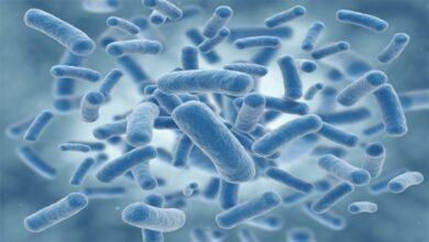 تصویر از دانستنی های جالب درباره باکتری ها