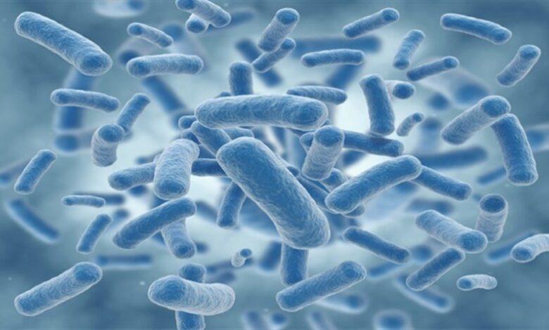 دانستنی های جالب درباره باکتری ها